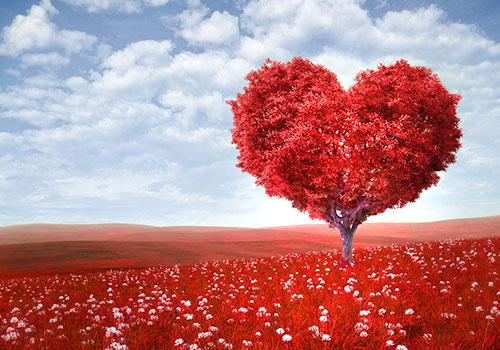 groot van liefde