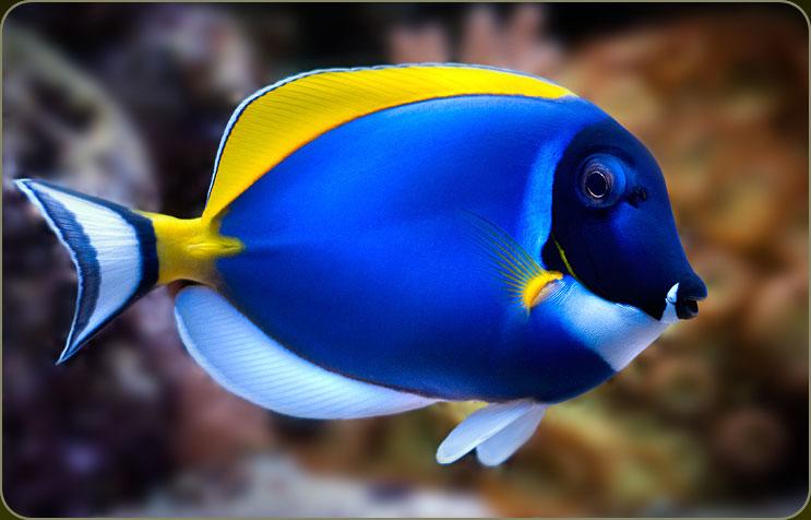 Vissen zijn niet alleen adembenemend mooi, ze zitten ook technisch
